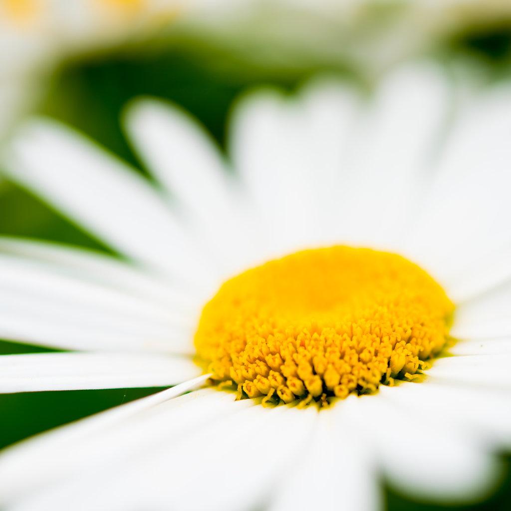 sun flower stories